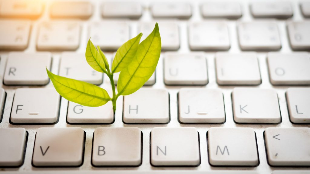 Leaves nature and keyboard.Small green plant growing from white